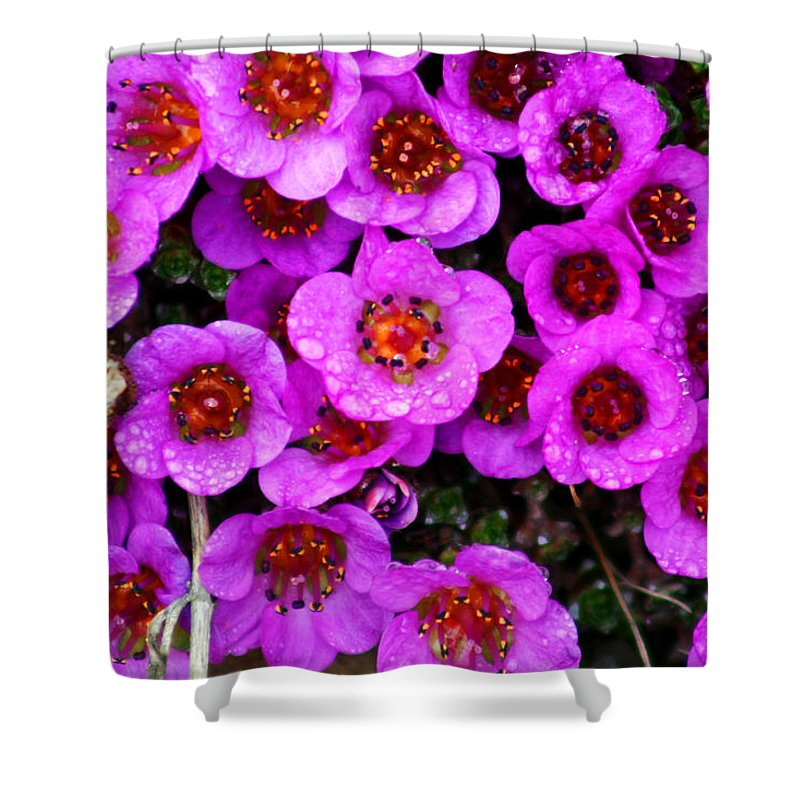 Flowers. Wild Flowers Shower Curtain featuring the photograph Alaskan Wild Flowers by Anthony Jones