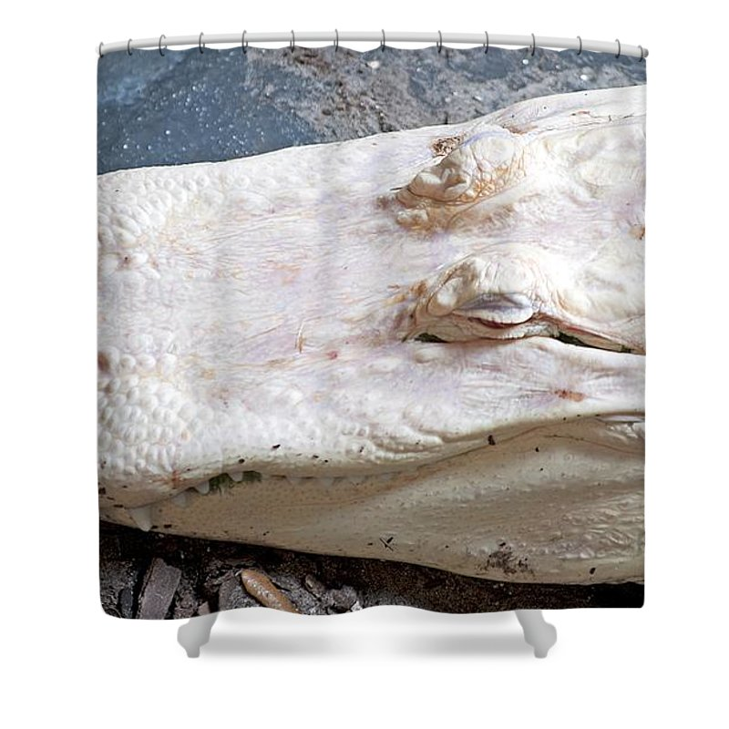 Alligator Shower Curtain featuring the photograph Albino Alligator by Kenneth Albin