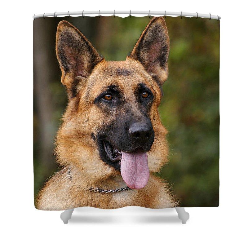 German Shepherd Dog Shower Curtain featuring the photograph Alert by Sandy Keeton