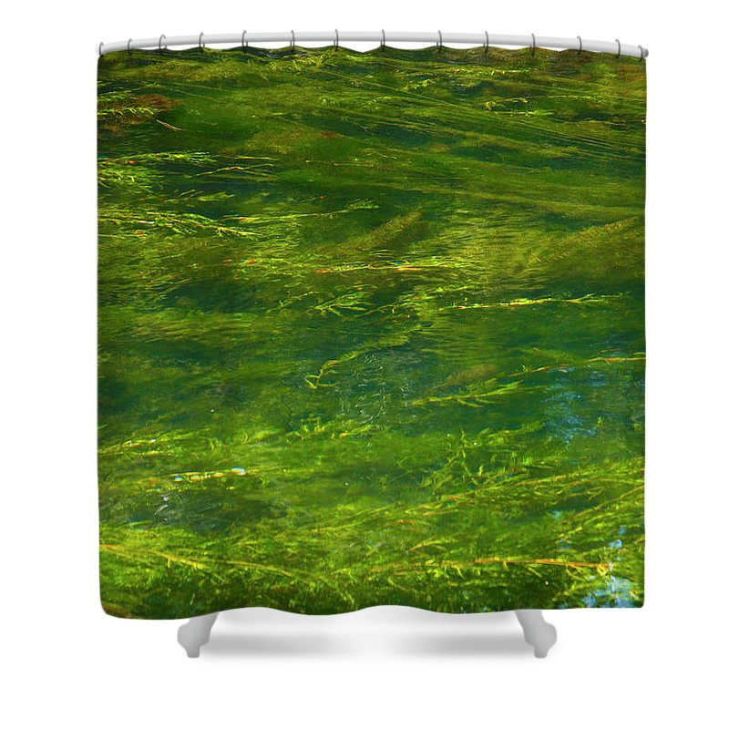 River Shower Curtain featuring the photograph Algae by Stefania Levi