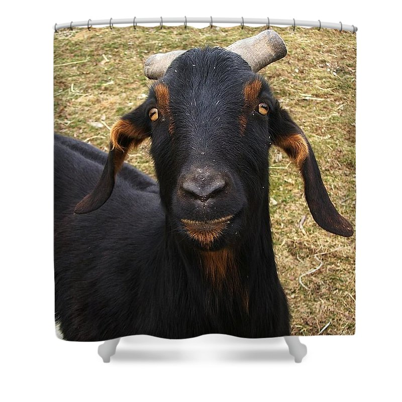 Goat Shower Curtain featuring the photograph All About Me by Sara Raber