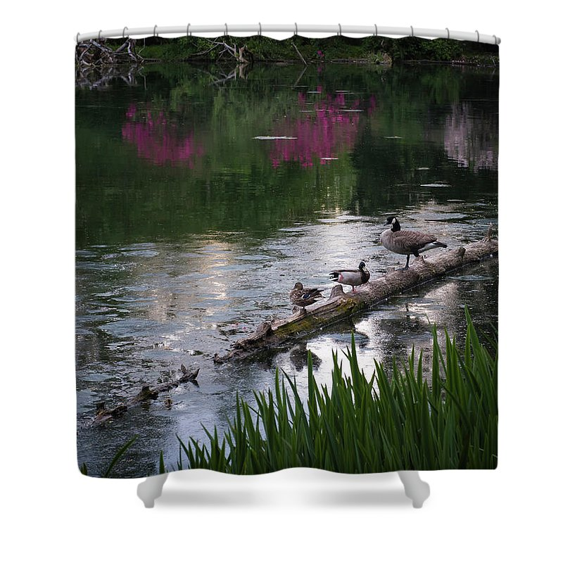 Birds Shower Curtain featuring the photograph All Along The Log by Steven Clark