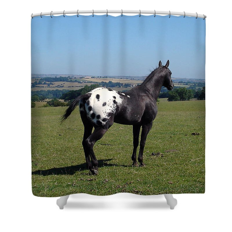 Horses Shower Curtain featuring the photograph All He Surveys by Susan Baker
