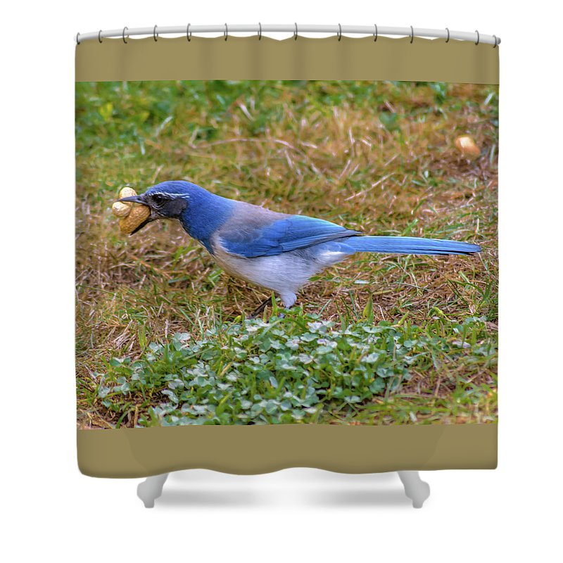 Blue Jay Shower Curtain featuring the photograph All Mine by Daniel LaFollette
