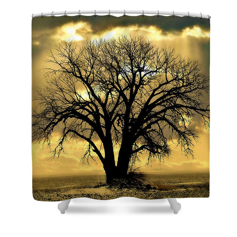 Tree Shower Curtain featuring the photograph All That Remains by Julie Hamilton