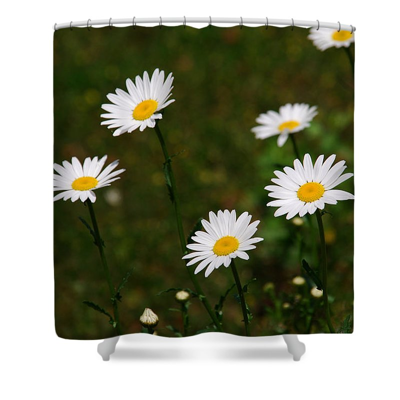 Daisy Shower Curtain featuring the photograph All The Daisies by Susanne Van Hulst
