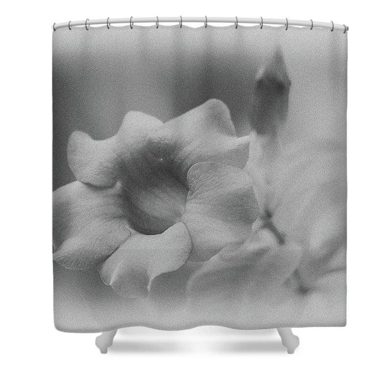 Allamanda Shower Curtain featuring the photograph Allamanda Bloom by Michael Peychich
