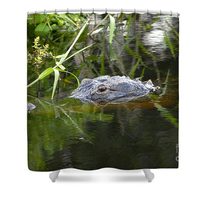 Alligator Shower Curtain featuring the photograph Alligator Hunting by David Lee Thompson