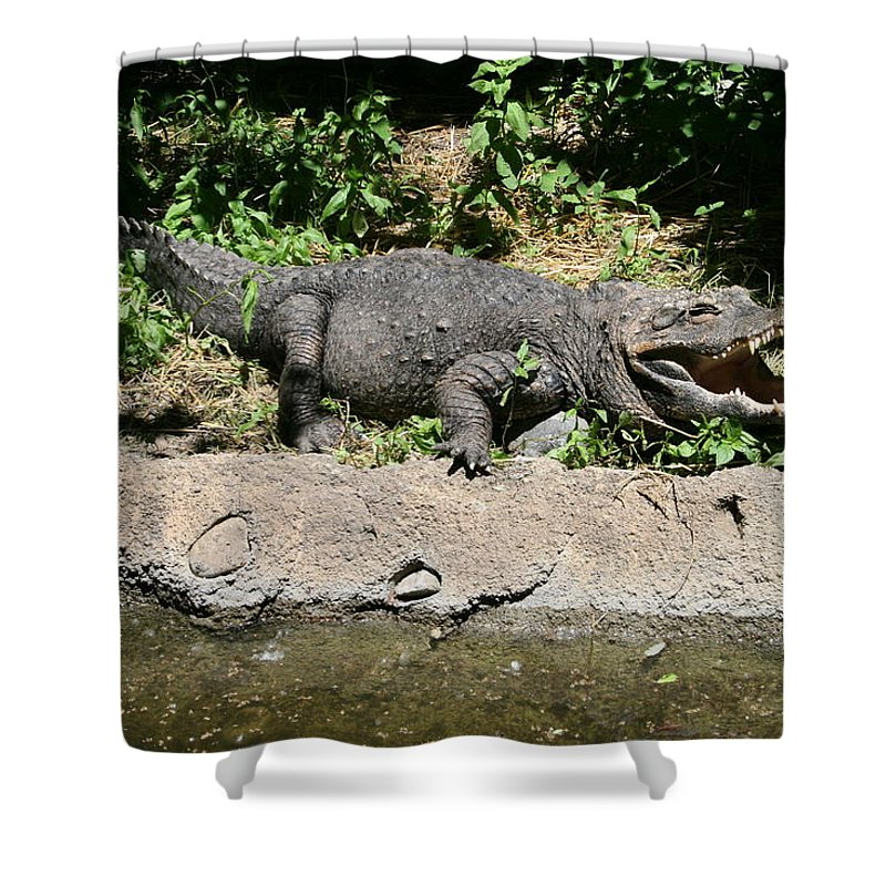 Alligator Shower Curtain featuring the photograph Alligator Surprise by Lynn Michelle