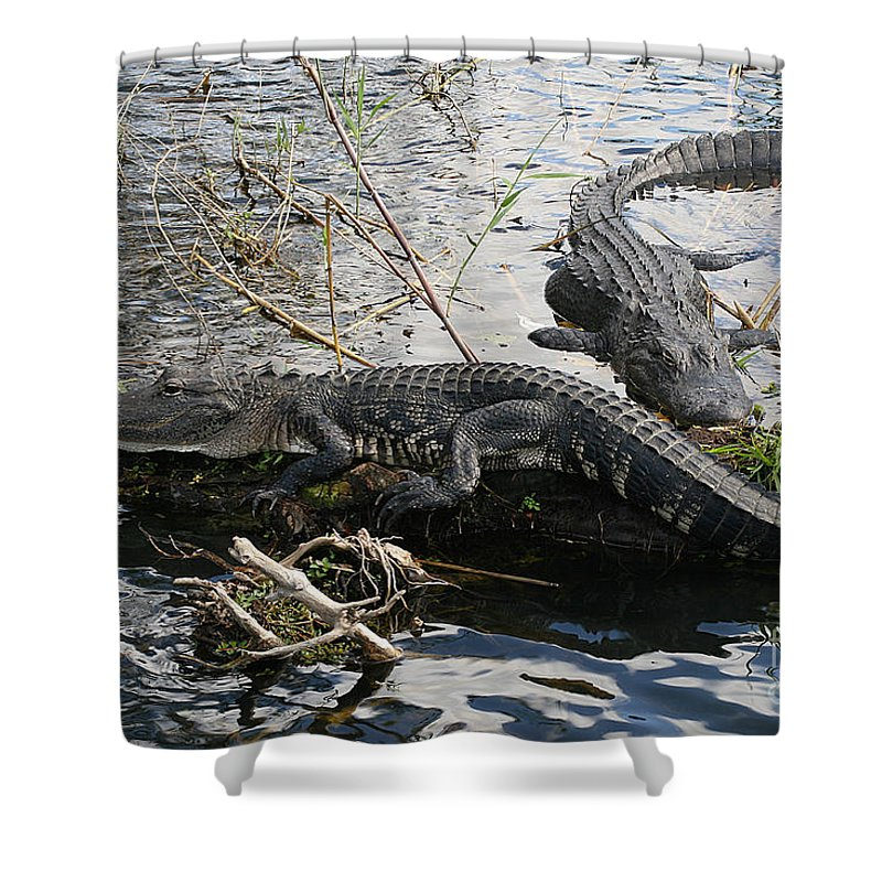Alligator Shower Curtain featuring the photograph Alligators In An Everglades Swamp by Max Allen