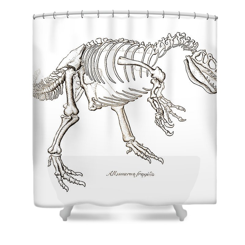 Allosaurus Shower Curtain featuring the drawing Allosaurus Skeleton by Karla Beatty