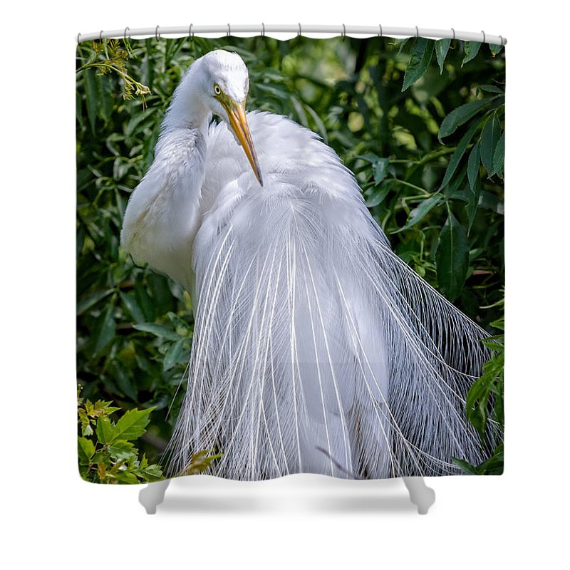 Avian Shower Curtain featuring the photograph Alluring In White by Christopher Holmes