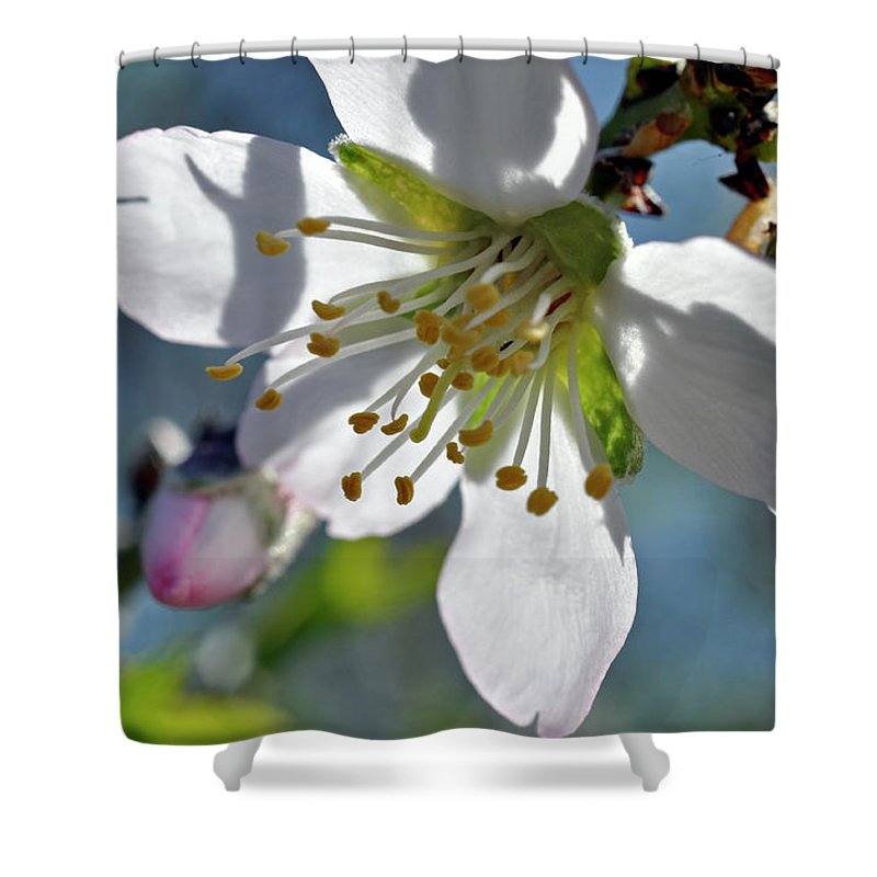 Almonds In Lachish 1 Shower Curtain featuring the photograph Almonds In Lachish 1 by Dubi Roman