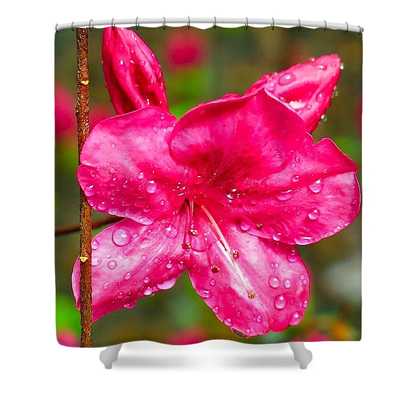Azalea Shower Curtain featuring the photograph Almost April Showers Azalea by Betty Buller Whitehead