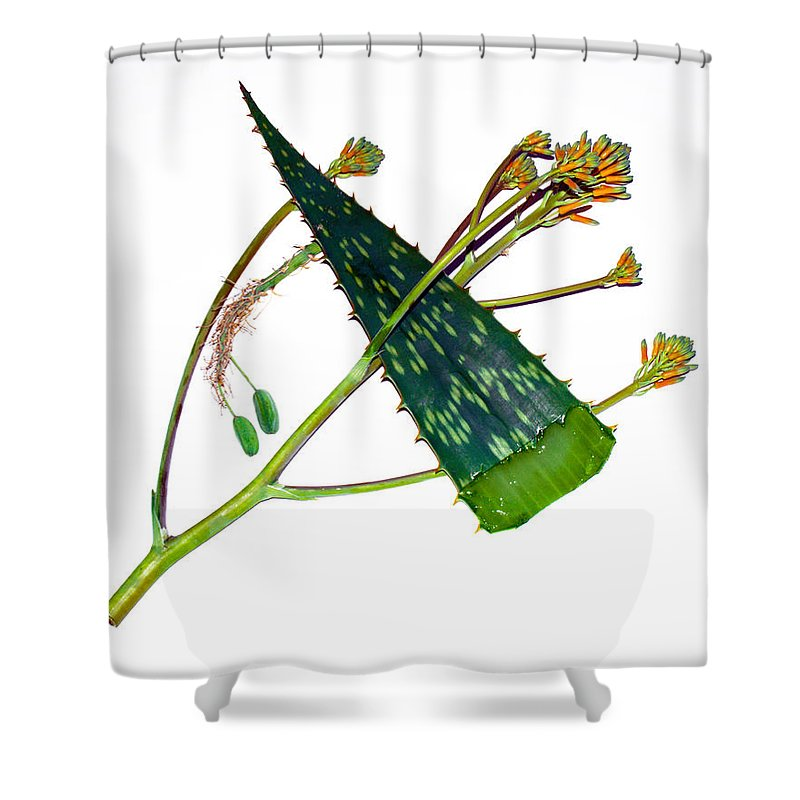 Aloe; Vera; Medicine; Properties; Medicinal; Ailments; Biblical; Ointment; Burns; Burn; Cuts; Rash; Shower Curtain featuring the photograph Aloe Vera by Allan Hughes