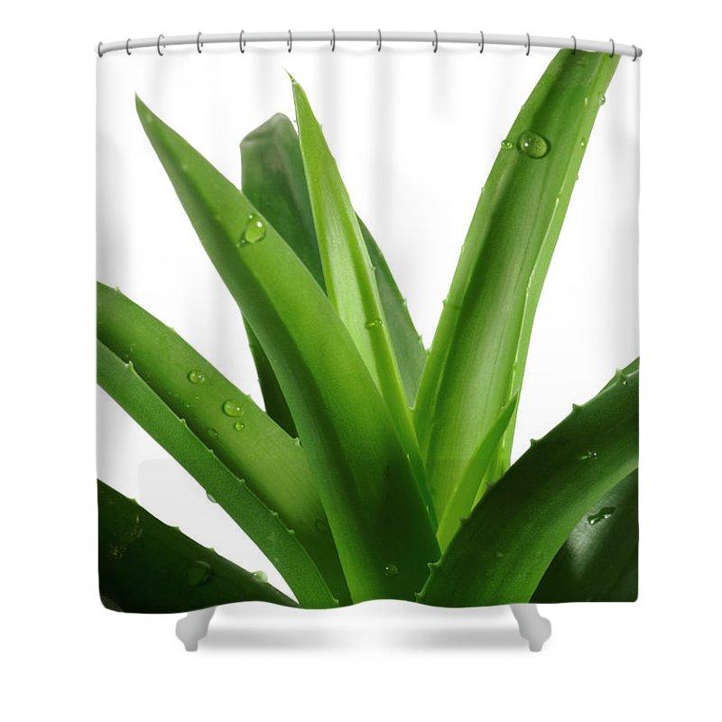 Aloe Shower Curtain featuring the photograph Aloe Vera by Jelena Stojic
