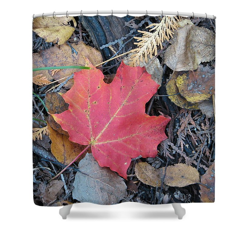 Leaves Shower Curtain featuring the photograph Alone In The Woods by Kelly Mezzapelle