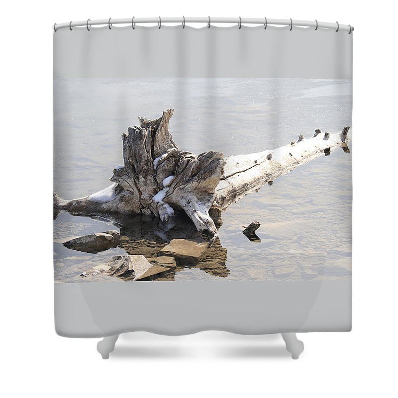 Tree Shower Curtain featuring the photograph Alone by Tiffany Vest