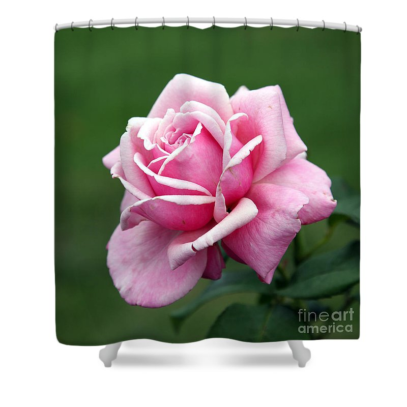 Rose Shower Curtain featuring the photograph Alone Time by Amanda Barcon