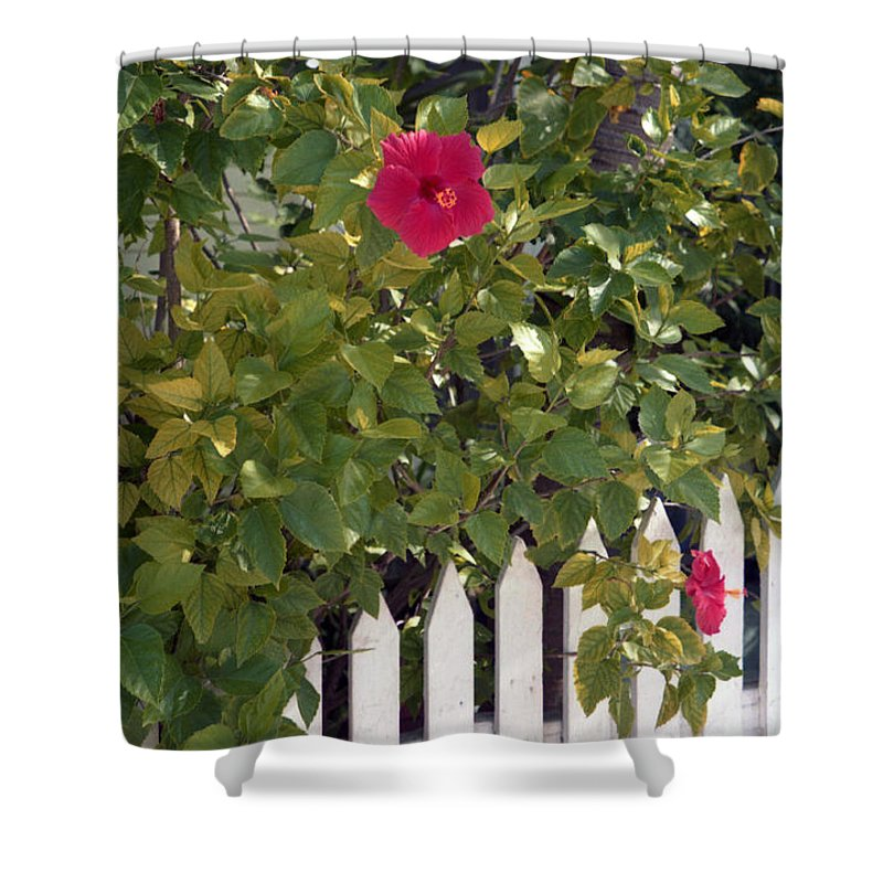 Azelea Shower Curtain featuring the photograph Along The Picket Fence by Richard Rizzo