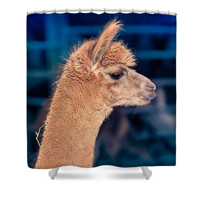 Alpaca Shower Curtain featuring the photograph Alpaca Wants To Meet You by TC Morgan
