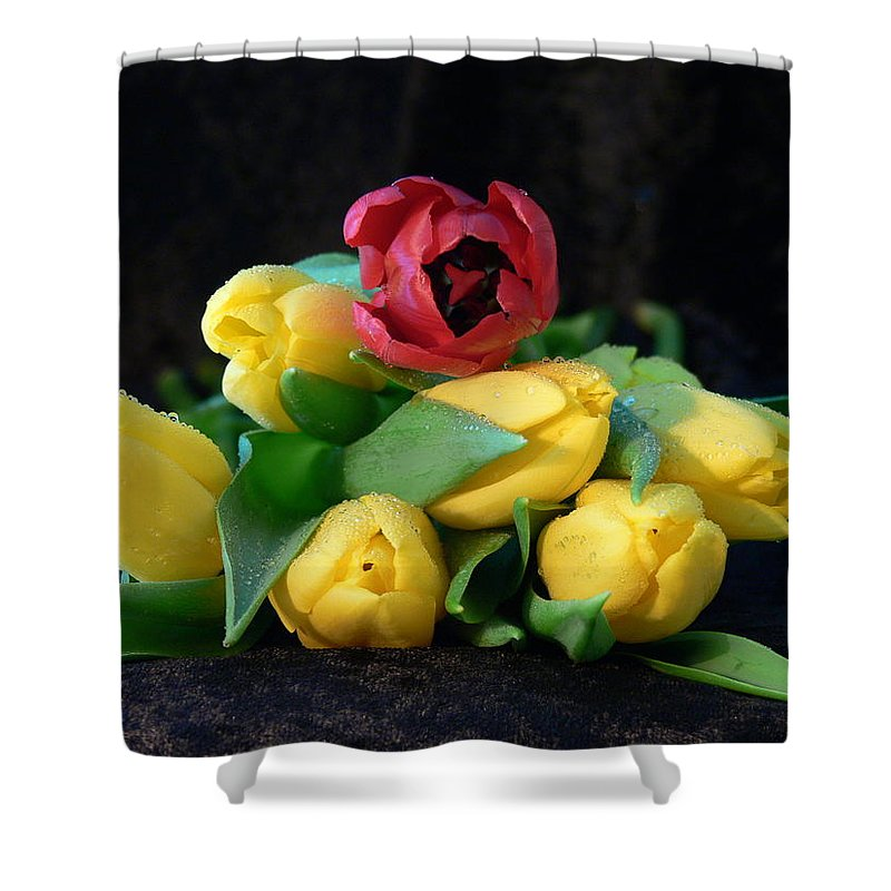 New England Photos Shower Curtain featuring the photograph Always one in a crowd by Nancie DeMellia