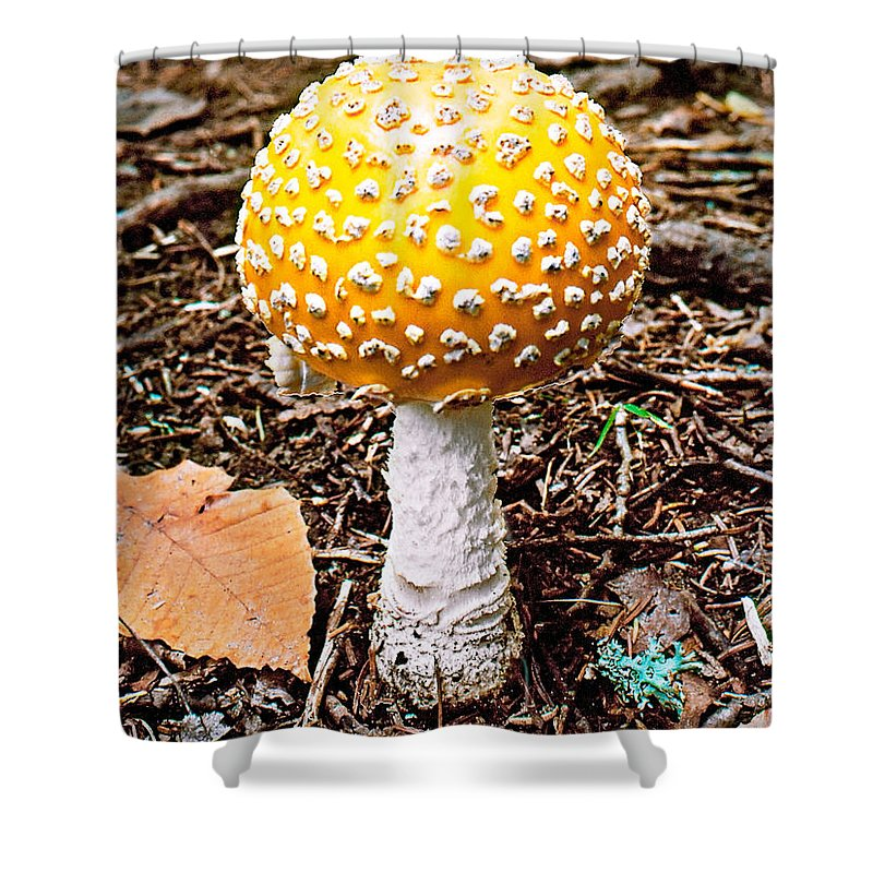 Mushroom Shower Curtain featuring the photograph Amanita Mushroom Photo by Peter J Sucy