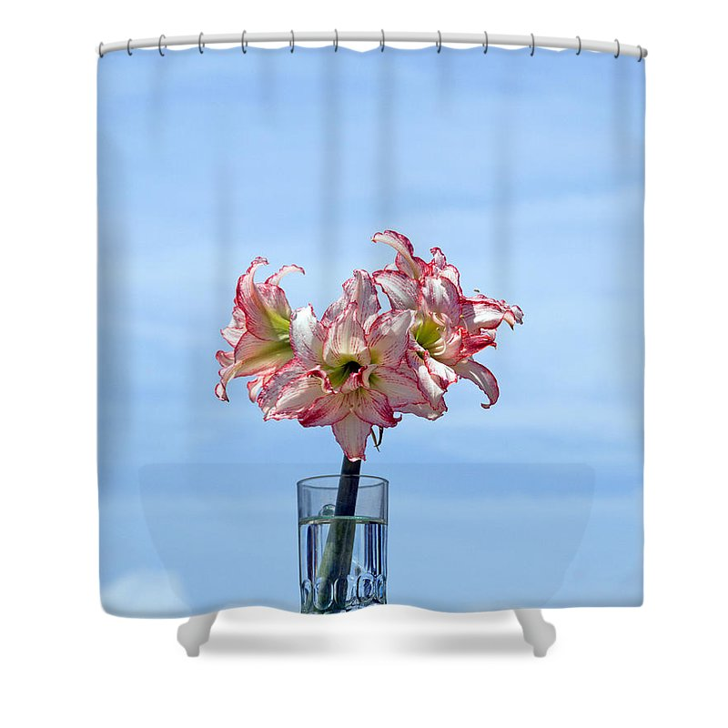 Amaryllis; Belladonna; Lily; Naked; Ladies; Lady; Florida; Spring; Sky; Bloom; Blooming. Flower; Blo Shower Curtain featuring the photograph Amaryillis Belladonna Against The Spring Florida Sky by Allan Hughes