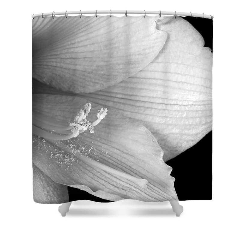 Amaryllis Shower Curtain featuring the photograph Amaryllis Flower Close Up Bw 12-27-10 by James BO Insogna