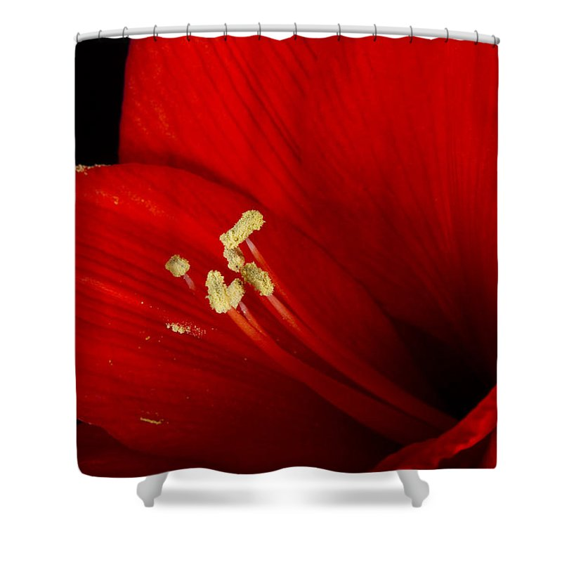 Amaryllis Shower Curtain featuring the photograph Amaryllis Pollen by James BO Insogna