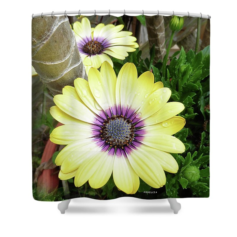 Flowers Shower Curtain featuring the photograph Amazing Daisy by Angelcia Wright
