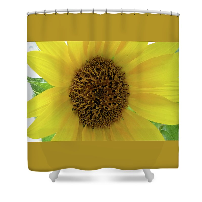 Flowers Shower Curtain featuring the photograph Unique Sunflower by Angelcia Wright