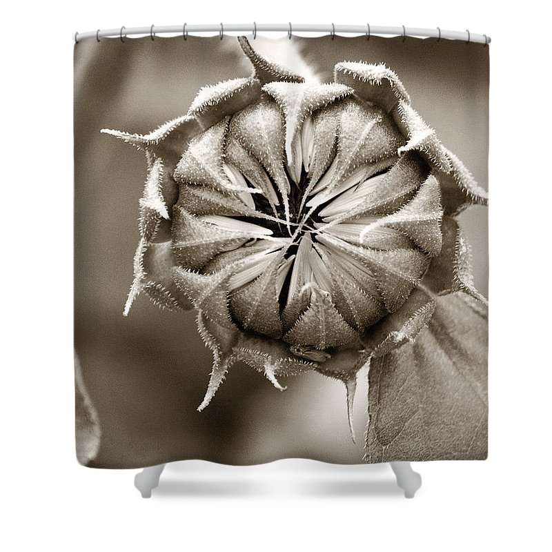 Sunflower Shower Curtain featuring the photograph Amazing Sunflower Bud by Marilyn Hunt