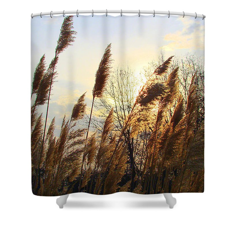 Pampasgrass Shower Curtain featuring the photograph Amber Waves Of Pampas Grass by J R Seymour