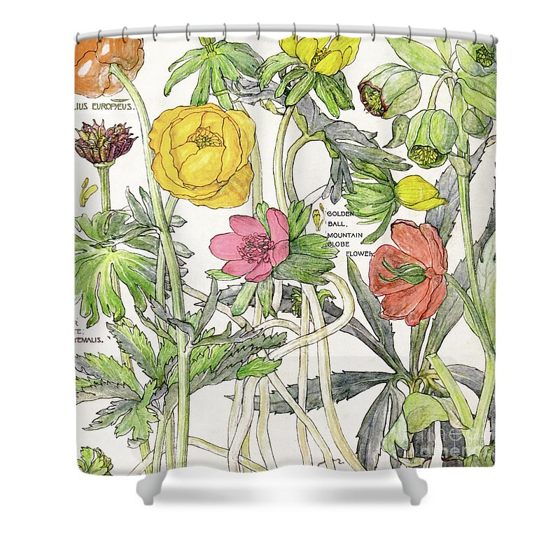 Flowers Shower Curtain featuring the painting Ambrosia Vi by Mindy Sommers