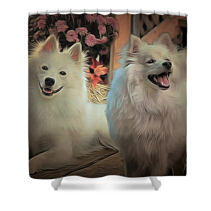 Dogs Shower Curtain featuring the painting Americain Eskimo by Janice MacLellan