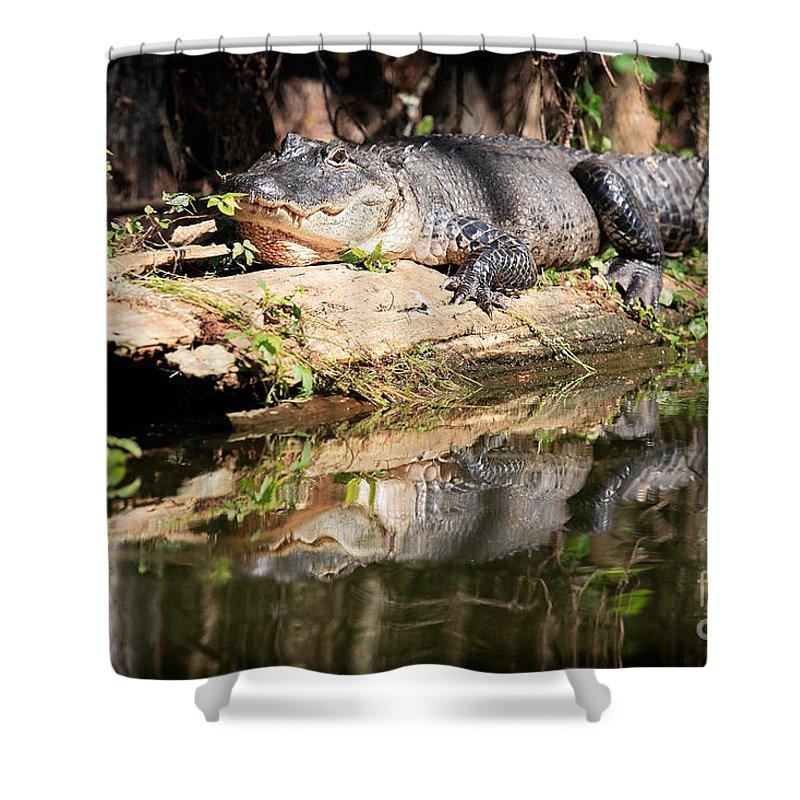 American Alligator Shower Curtain featuring the photograph American Alligator With Caterpillar by Matt Suess