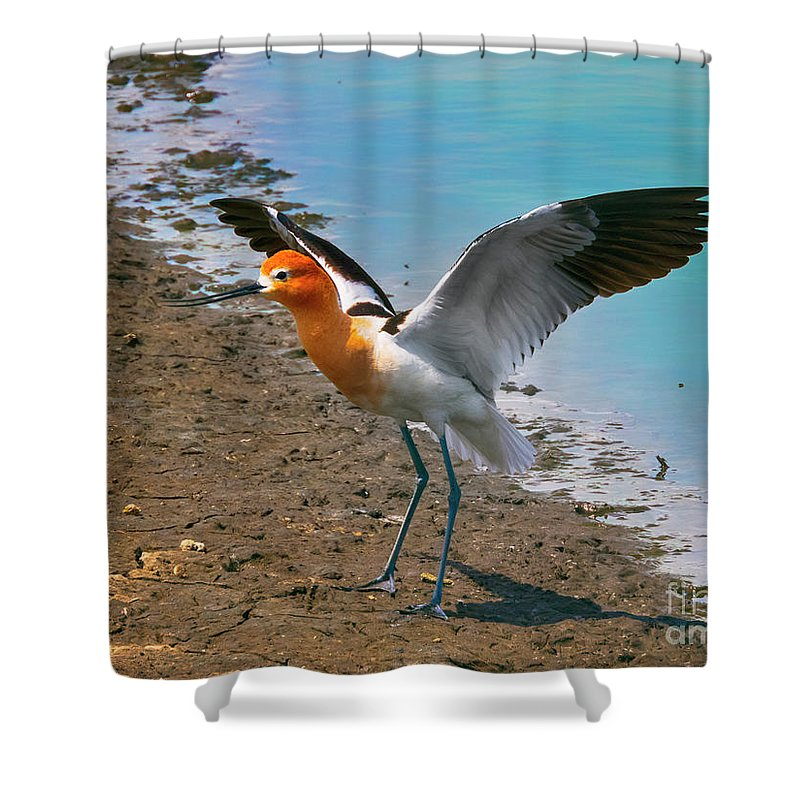 Kasia Shower Curtain featuring the photograph American Avocet by Kasia Bitner