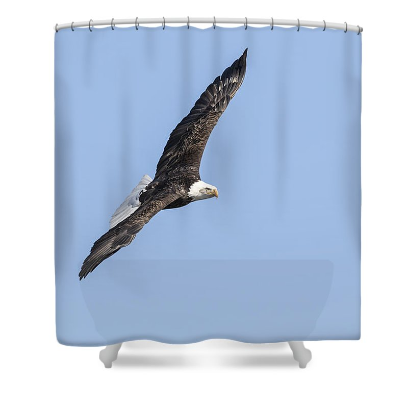 American Bald Eagle Shower Curtain featuring the photograph American Bald Eagle 2015-27 by Thomas Young