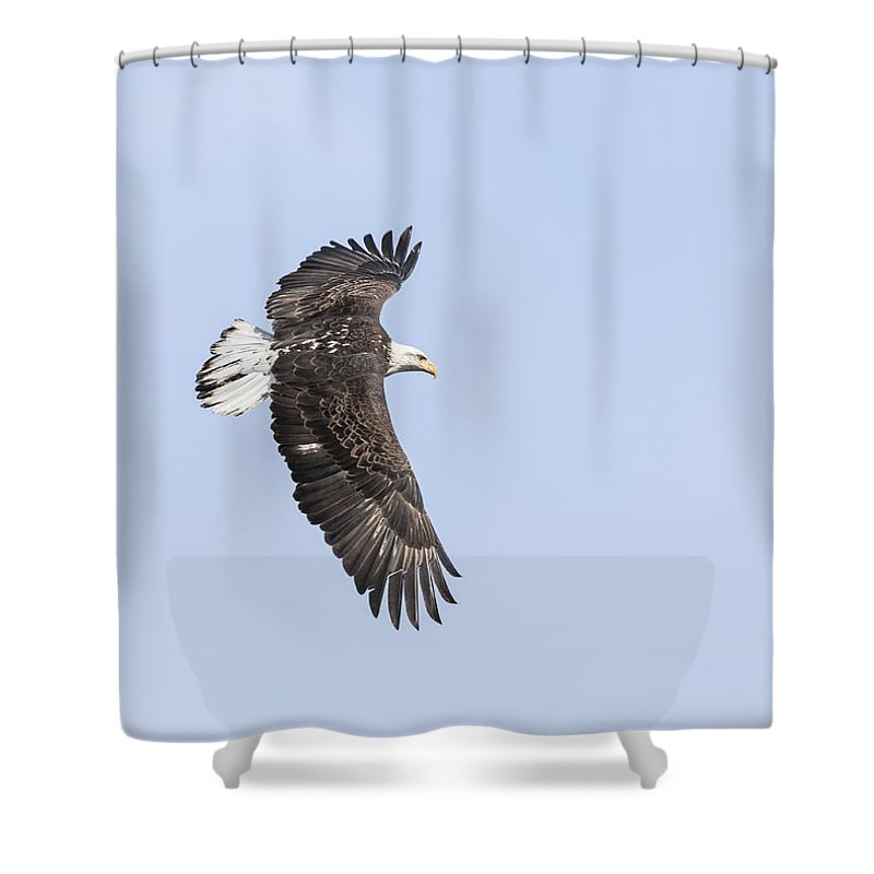 American Bald Eagle Shower Curtain featuring the photograph American Bald Eagle 2015-28 by Thomas Young