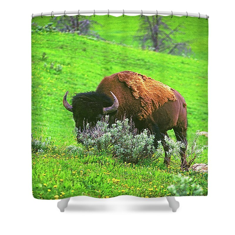 American Shower Curtain featuring the photograph American Bison by Don Schimmel