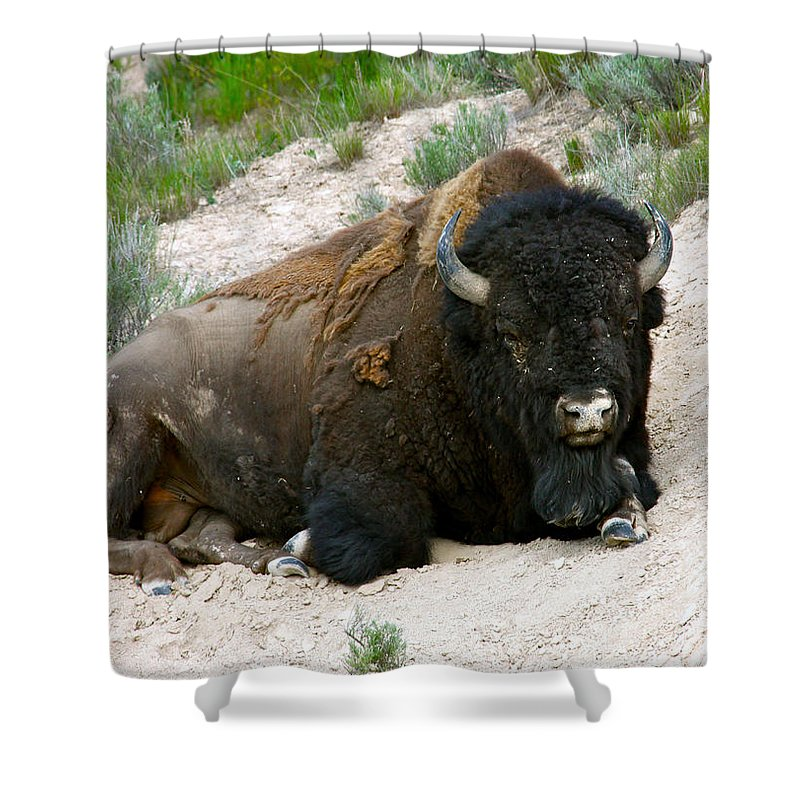 America Shower Curtain featuring the photograph American Bison by Karon Melillo DeVega