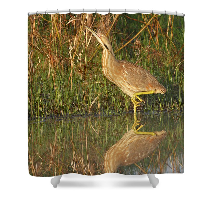 Shore Shower Curtain featuring the photograph American Bittern Along The Shore by Mark Wallner