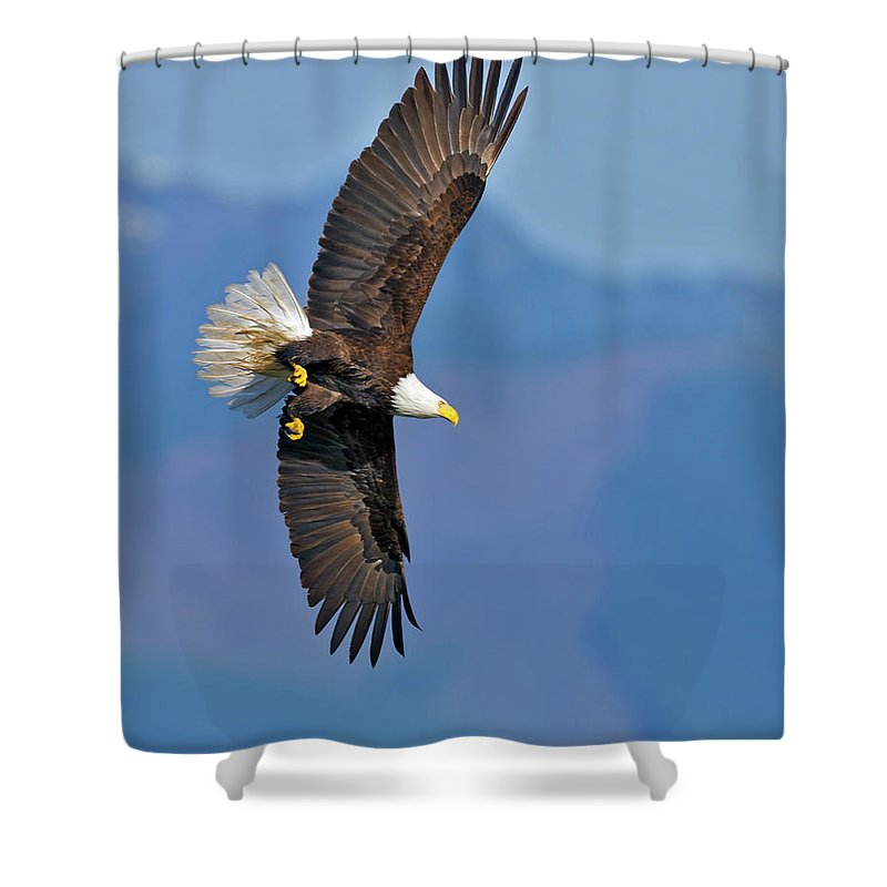 American Shower Curtain featuring the photograph American Blad Eagle On The Wing by Gary Langley