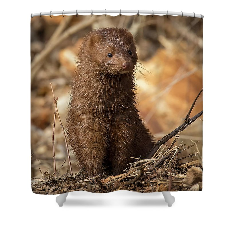 Canon Shower Curtain featuring the photograph American Mink At Johnson Park by Ricky L Jones
