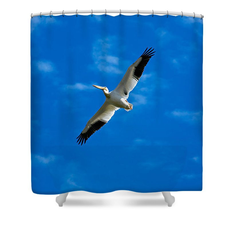 American Shower Curtain featuring the photograph American White Pelican by Marilyn Hunt