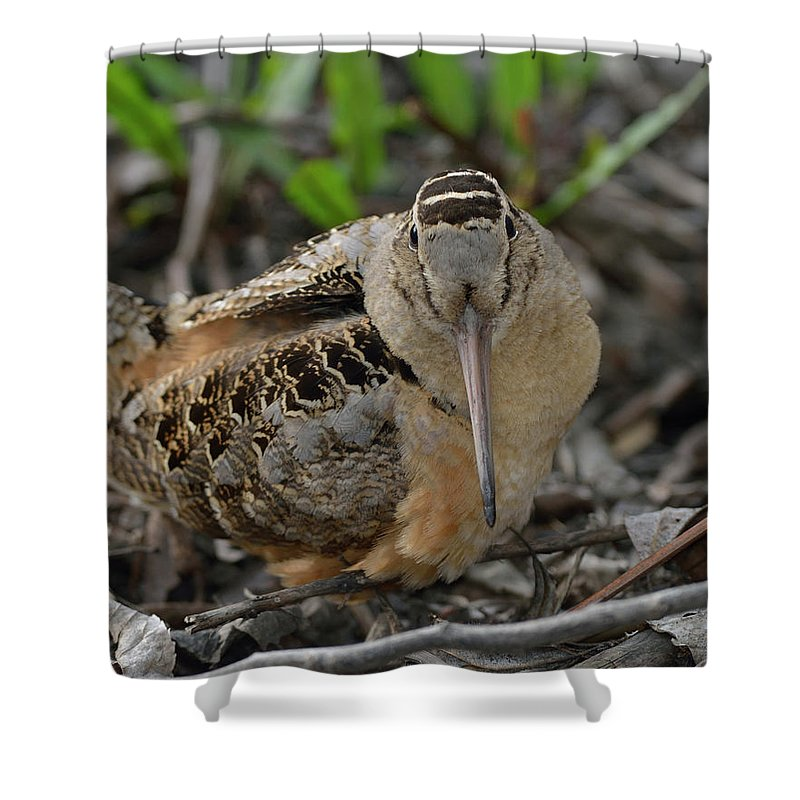 North American Shower Curtain featuring the photograph American Woodcock by Mark Wallner
