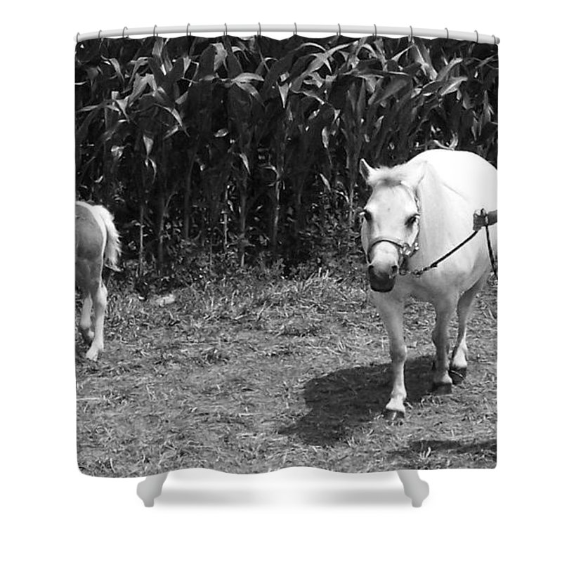 Amish Girl With Her Colt Shower Curtain featuring the photograph Amish Girl With Her Colt by Eric Schiabor