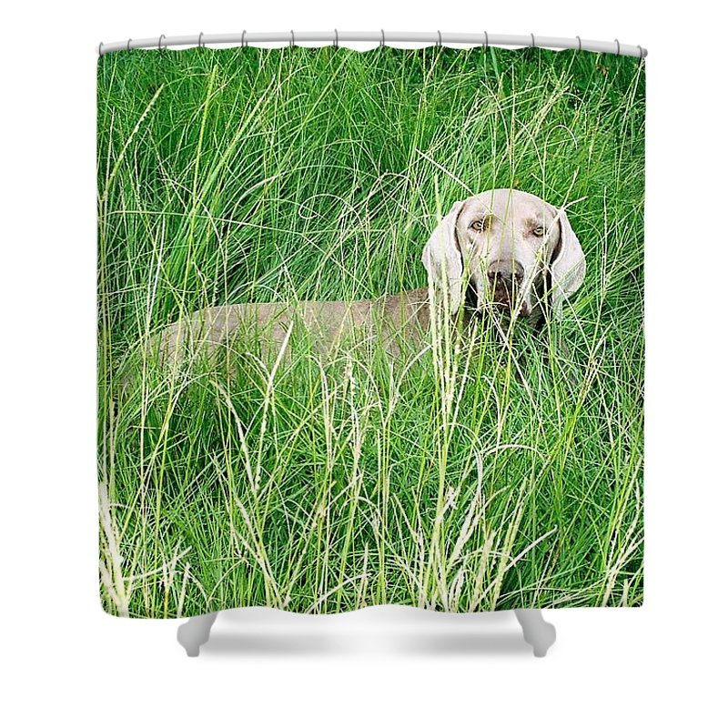 Grass Shower Curtain featuring the photograph Among The Grasses by Cindy New