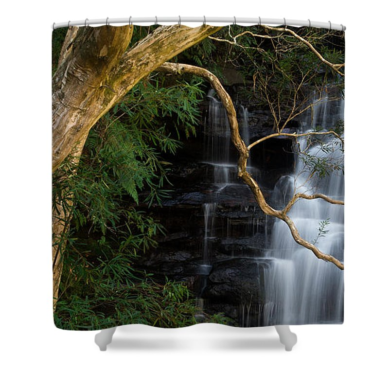 Tree Shower Curtain featuring the photograph Among The Trees by Mark White